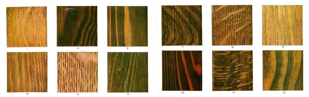 Lem kayu dan lem hpl Crona - types of wood 2 1
